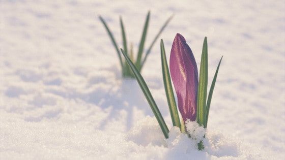 spring is coming poems